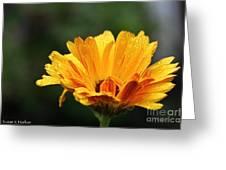 Gold Petals Greeting Card