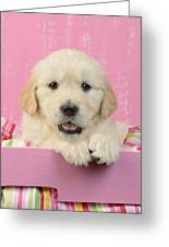 Gold Retriever Pink Background Greeting Card
