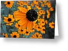 Gold Rudbeckia Blooms Greeting Card