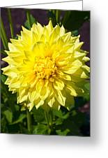 Gold Waterlily Dahlia Greeting Card