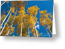 Golden Aspen Stand Greeting Card