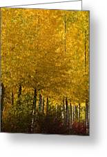 Golden Aspens Greeting Card by Don Schwartz