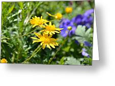 Golden Aster Greeting Card
