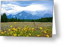 Golden Asters And Tetons From The Road In Grand Teton National Park-wyoming Greeting Card