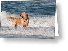 Golden At The Beach Oil Greeting Card