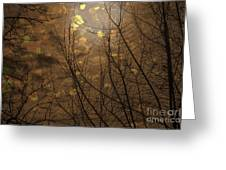 Golden Autumn Abstract Sky Greeting Card