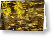 Golden Autumn Colour Foliage On Rainy Pond Greeting Card