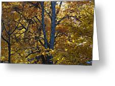 Golden Autumn Foliage At Palenville In October Greeting Card
