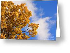 Golden Autumn Leaves And Blue Sky Greeting Card