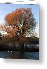 Golden Autumn Greeting Card by Rhonda Humphreys