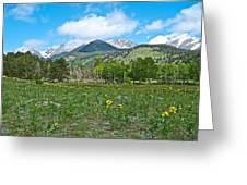 Golden Banner In Horseshoe Park In Rocky Mountain Np-co- Greeting Card