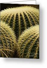 golden barrel cactus Mexico Greeting Card