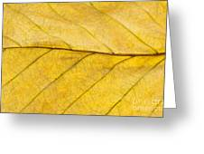 Golden Beech Leaf Greeting Card