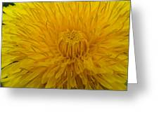 Golden Bloom Greeting Card