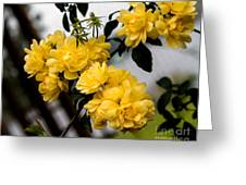 Golden Blooms One Greeting Card
