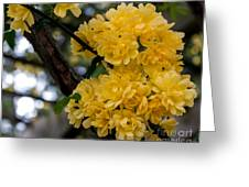 Golden Blooms Two Greeting Card