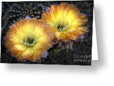 Golden Cactus Flowers  Greeting Card