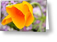 Golden California Poppy Greeting Card