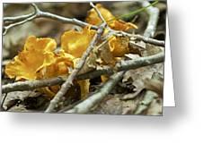 Golden Chanterelle - Cantharellus Cibarius Greeting Card