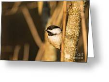 Golden Chickadee Greeting Card