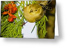 Golden Christmas Finch Greeting Card