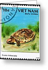 Golden Coin Turtle Cuora Trifa Greeting Card