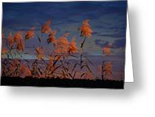 Golden Common Reeds Greeting Card