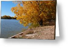 Golden Cottonwoods Greeting Card