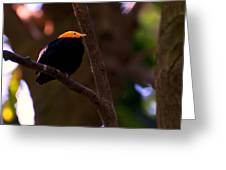 Golden Crested Mynah Greeting Card