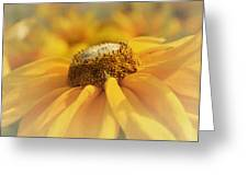 Golden Crown - Rudbeckia Flower Greeting Card