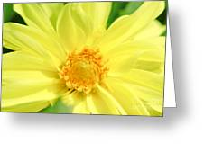 Golden Daisy Greeting Card