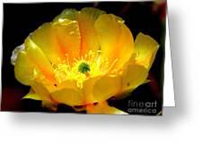 Golden Desert Flower Greeting Card