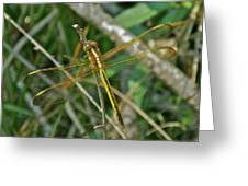 Golden Dragonfly At Rest Greeting Card