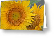 Golden Duo - Sunflowers Greeting Card