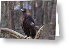 Golden Eagle 1 Greeting Card