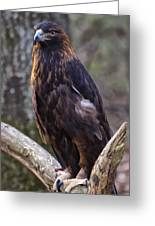 Golden Eagle 2 Greeting Card