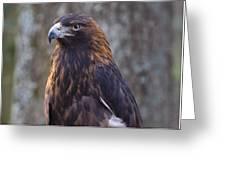 Golden Eagle 3 Greeting Card