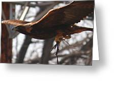 Golden Eagle Close Greeting Card