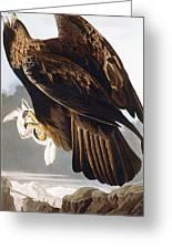Golden Eagle Greeting Card by John James Audubon