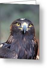Golden Eagle Lookin' At You Greeting Card