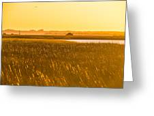 Golden End Of Day  Greeting Card