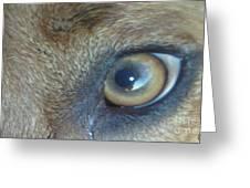 Golden Eye Of Norbu 12 18 2011 Greeting Card