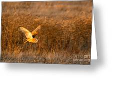 Golden Flight Greeting Card