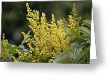 Golden Flora 2013 Greeting Card