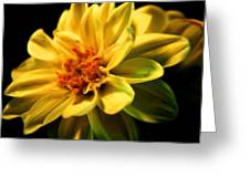 Golden Flower  Greeting Card