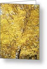 Golden Foliage Greeting Card