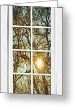 Golden Forest  Branches White 8 Windowpane View Greeting Card