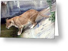 Golden Fur Lioness Greeting Card