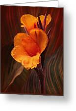 Golden Glow Canna Lily Greeting Card