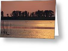 Golden Glow Greeting Card